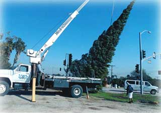 lifting tree into place