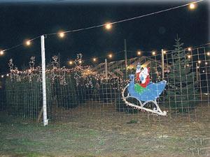 George's Christmas Tree Lot at night
