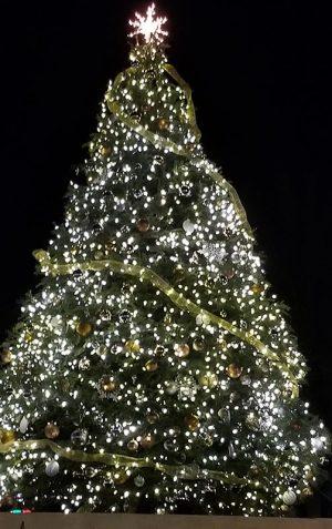 25 Foot Christmas Tree