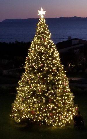 33 Foot Christmas Tree